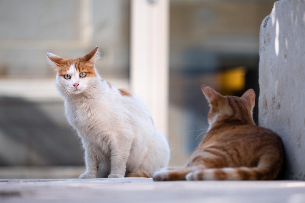 La importancia de las colonias de gatos